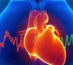 Нейрофизиологи РФ и Германии выяснили, что биение сердца влияет на восприятие информации