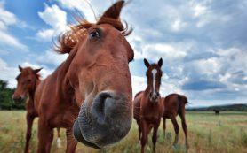 Лошади могут «читать» эмоции человека