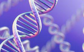 Программа расшифровки ДНК