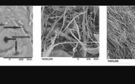 Ученые РФ и Франции создали новый метод переработки древесины в целлюлозу и ванилин