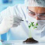 """Биологи ТюмГУ в составе международной группы предложили """"зеленый"""" способ борьбы с вредителями растений"""
