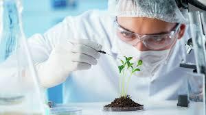 Биологи ТюмГУ в составе международной группы предложили «зеленый» способ борьбы с вредителями растений