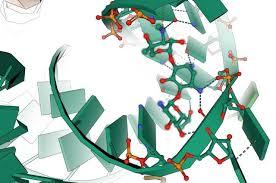 Учёные МГУ создали базу данных веществ, подавляющих белковый синтез