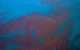 Новые шаги российских и иностранных ученых в изучении «красных приливов» на побережье Тихого океана