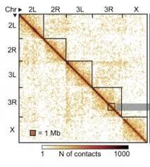 «Точечный» анализ упаковки ДНК проливает свет на тонкости этого фундаментального процесса