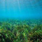 Морские водоросли помогают очищать море от пластика