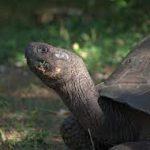 Ученые открывают секрет богатой экосистемы Галапагосских островов