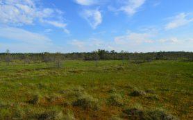 Экологи ТГУ картировали ключевой участок заповедника «Васюганский»