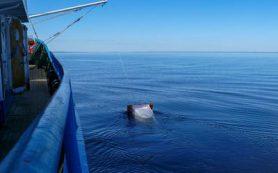 Микропластик в Онежском озере «тяжелее», чем в Северном Ледовитом океане