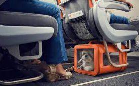 «Аэрофлот» смягчил требования к перевозке животных