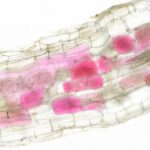 Ученые увидели, когда в корнях растений появляются грибы