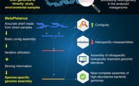Секвенирование неизвестного стало проще: Metaplatanus улучшает сборку метагенома