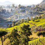 Ростуризм намерен поддержать регионы в создании условий для приема китайских туристов